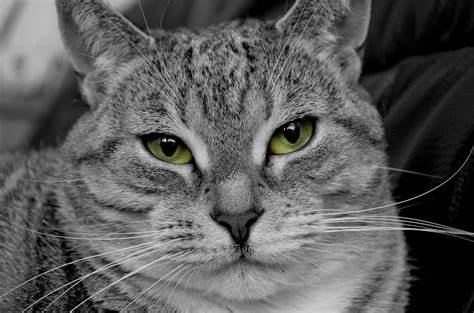 satowaドスのきいた猫